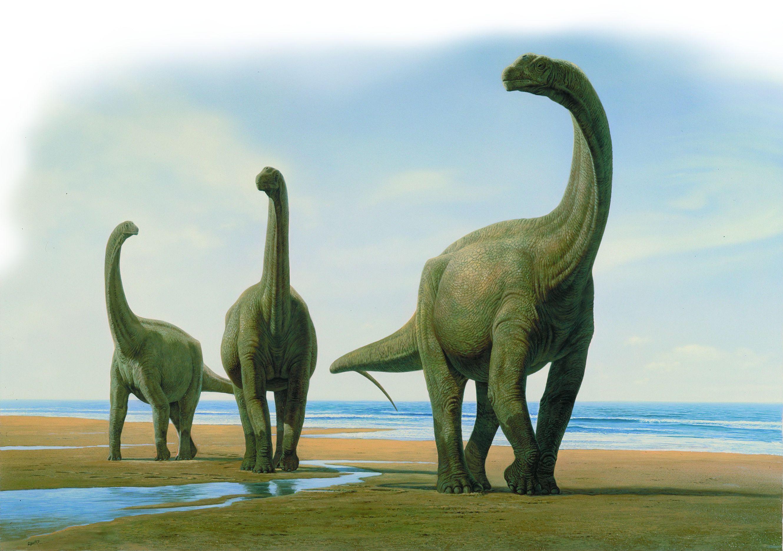 Simulan la digestión de los dinosaurios en un laboratorio / Noticias ...