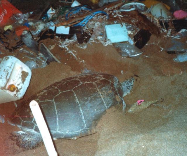 Residuos plásticos en una playa donde anidan las tortugas marinas. / Annette Broderick