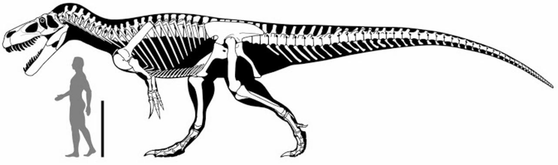 Un nuevo dinosaurio hallado en Portugal era el mayor depredador ...