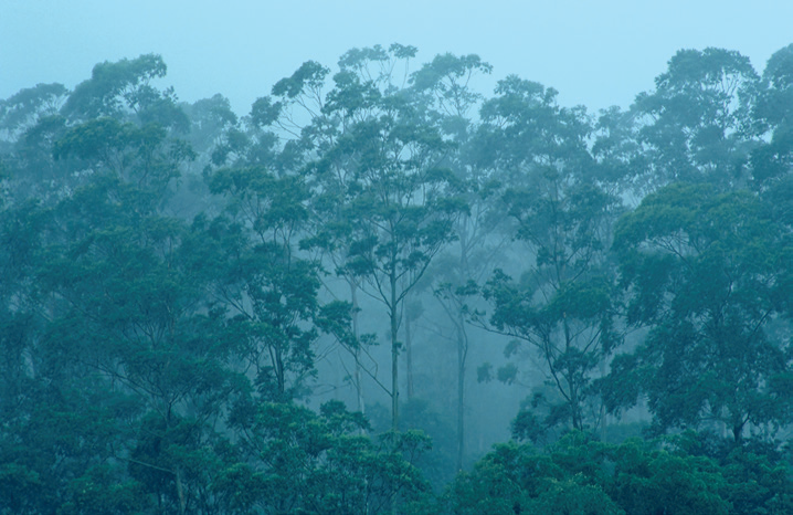 Los árboles tropicales no crecen más a pesar del aumento de CO2