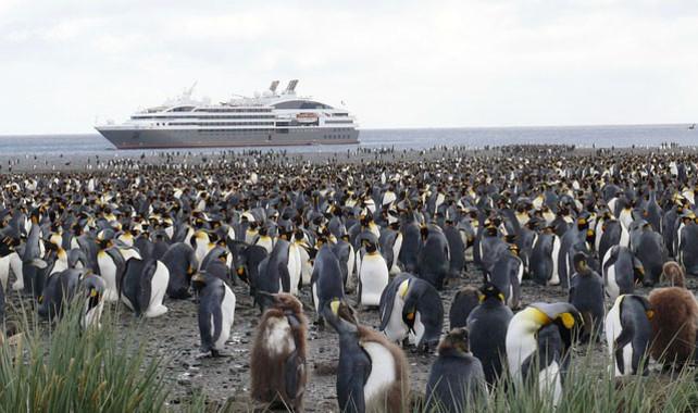 """<p/>Pingüinos en la Antártida expuestos al tráfico de buques. / Universidad de Valencia"""" /><span style="""