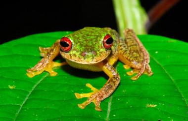https://www.agenciasinc.es/var/ezwebin_site/storage/images/en-exclusiva/embargos/mas-de-90-especies-de-anfibios-se-han-extinguido-por-un-hongo/6467847-2-esl-MX/Mas-de-90-especies-de-anfibios-se-han-extinguido-por-un-hongo_image_380.jpg