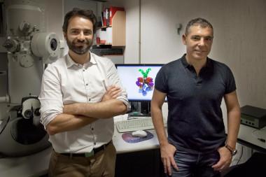 Resuelta la estructura 3D de la 'nanomáquina' que da virulencia a la tuberculosis