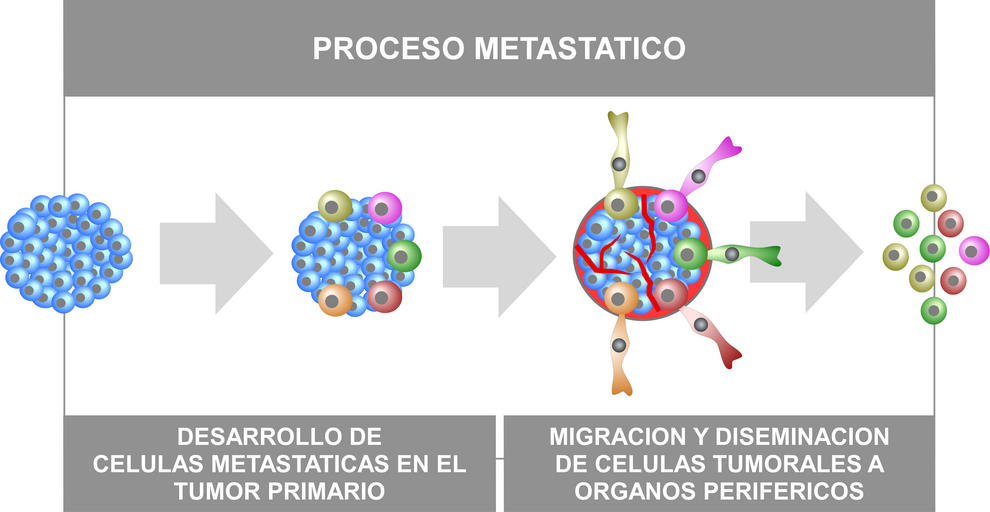Dibujo esquemático del proceso metastásico. Imagen: CIC