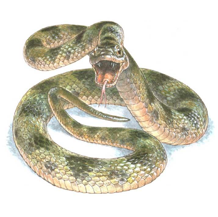 Así Es El Color De Una Serpiente Que Vivió Hace 10 Millones De Años