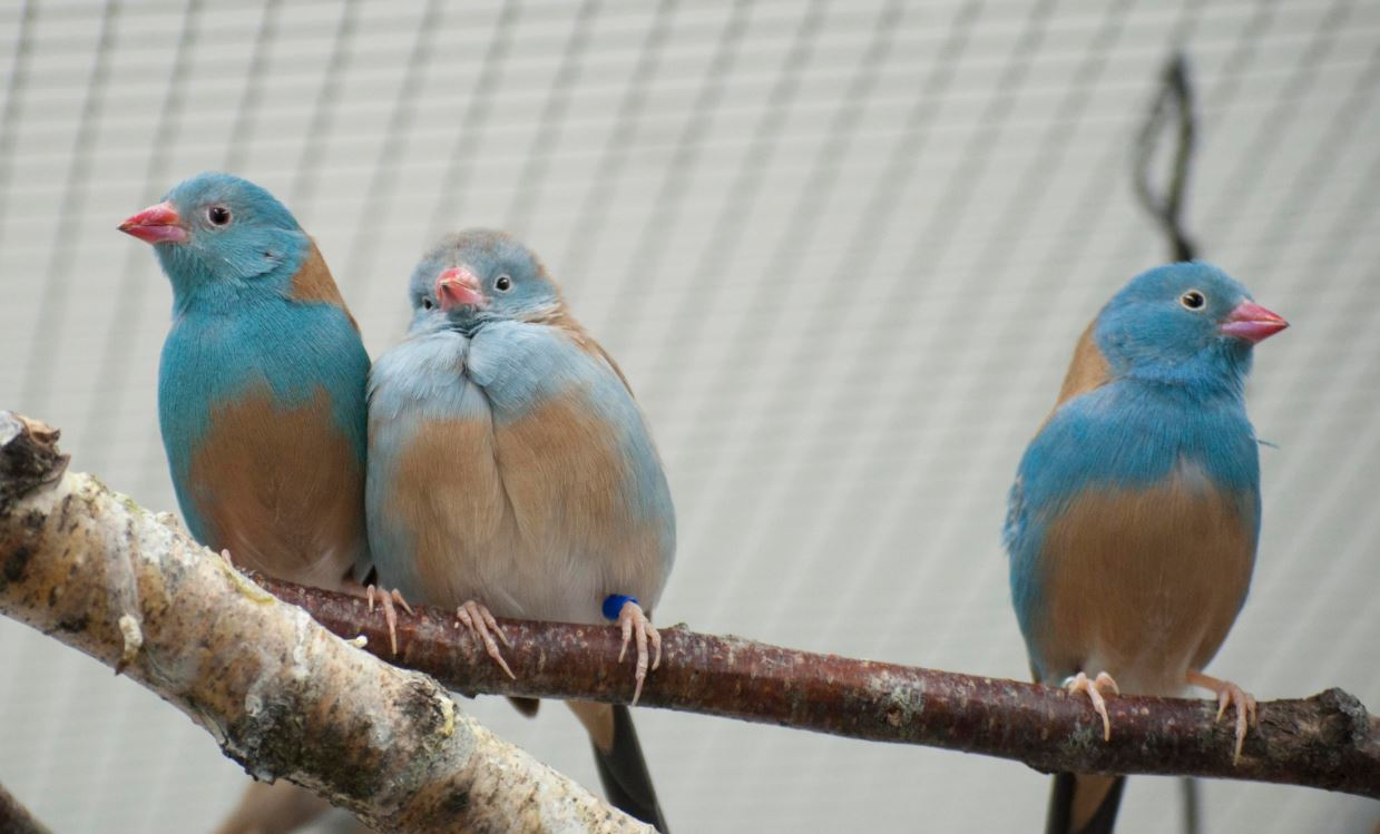 Estas-parejas-de-aves-desatan-su-pasion-ante-los-demas
