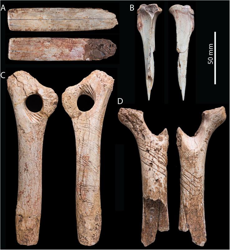 Estos huesos humanos fueron grabados como parte de un ritual caníbal ...