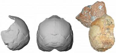 Reconstrucción del cráneo Apidima 1. /Katerina Harvati, Eberhard Karls University of Tübingen
