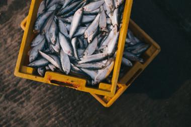 El mercurio es tóxico para el ser humano y se concentra en el pescado. / Pixabay