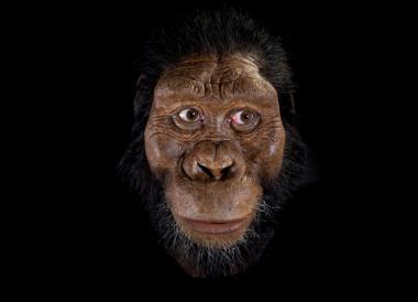 Reconstrucción facialde <em/></noscript>Australopithecus anamensis / John Gurche</p> <p>» width=»525″ height=»380″></p> <div class=