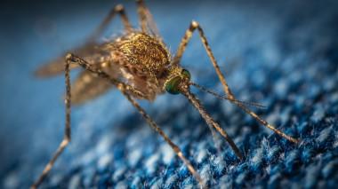 <p/>Las picaduras de mosquitopueden transmitir enfermedades como paludismo, dengue, fiebre amarilla y malaria / <a href=