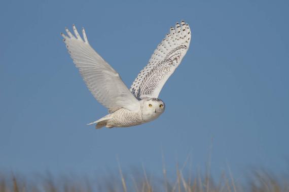 Una de cada cuatro aves desaparece en Norteamérica desde 1970