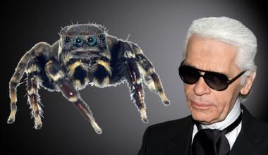 """<p/><em>Jotus karllagerfeldi</em> es la nueva especie de araña saltarina, nombrada en honor al icono de la moda Karl Lagerfeld. / Foto araña:Mark Newton, CeNak / Foto Karl Lagerfeld: Siebbi"""" /><em style="""