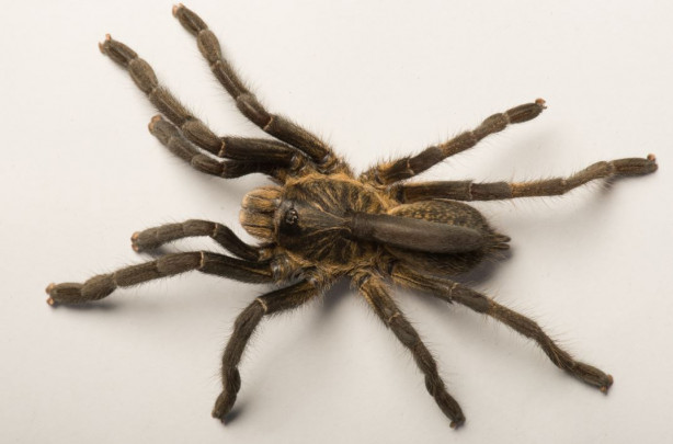 190217_tarantula3