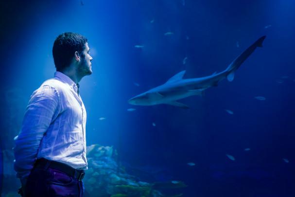 Dean frente al acuario de tiburones
