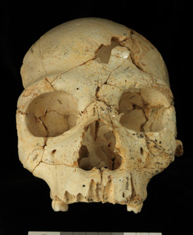 El Cráneo 17./ Javier Trueba | Madrid Scientific Films / Images / Media