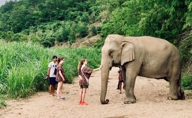 Elefante asiático en santuario