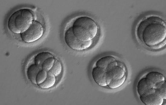China: Científicos aseguran haber creado dos bebés genéticamente modificadas. [Genética] Embriones-crispr_imagelarge