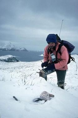 La-contaminacion-quimica-tambien-llega-a-las-aves-marinas-antarticas_image_380
