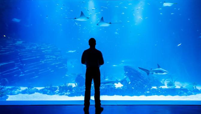 Nacho Dean en el acuario Atlantis