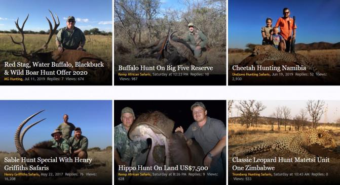 Ofertas de caza