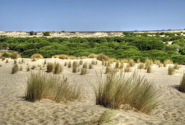 Parque_Nacional_de_Doñana_(34454583532)
