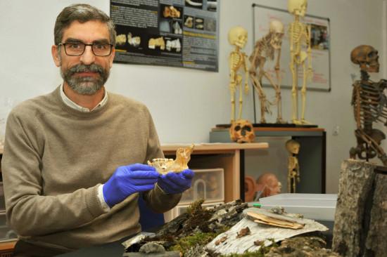 El investigador del CSIC Antonio Rosas con la mandíbula neandertal / Andrés Díaz (CSIC)