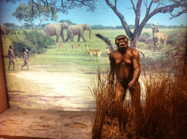 Lucy (Australopithecus afarensis) / SINC