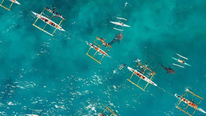 Vista aérea del turismo con tiburones ballena