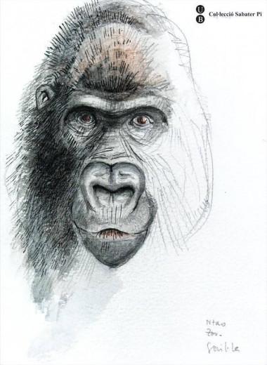 Primatologia