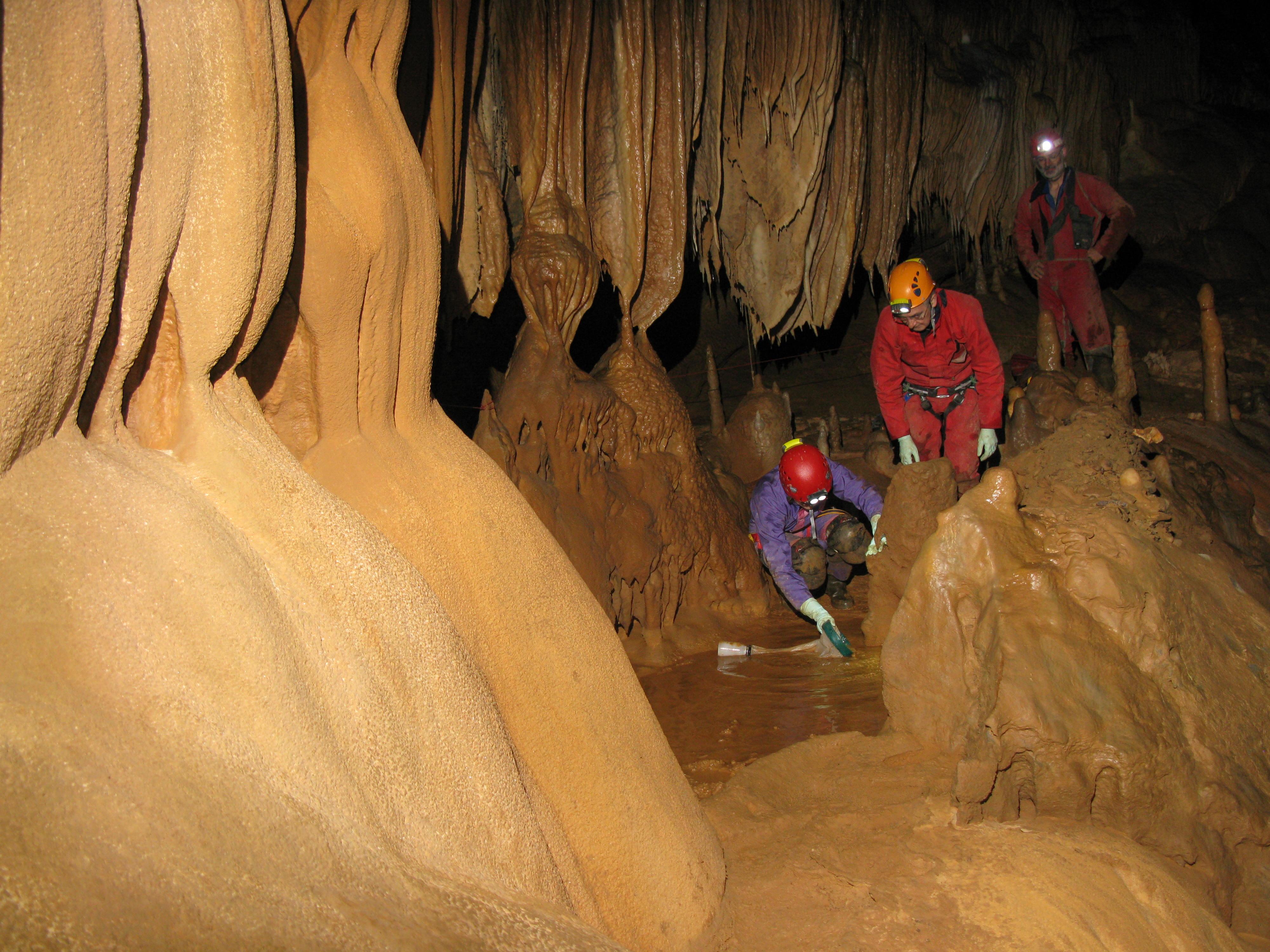 Descubierta una nueva especie de crustáceo subterráneo en una cueva de Vizcaya