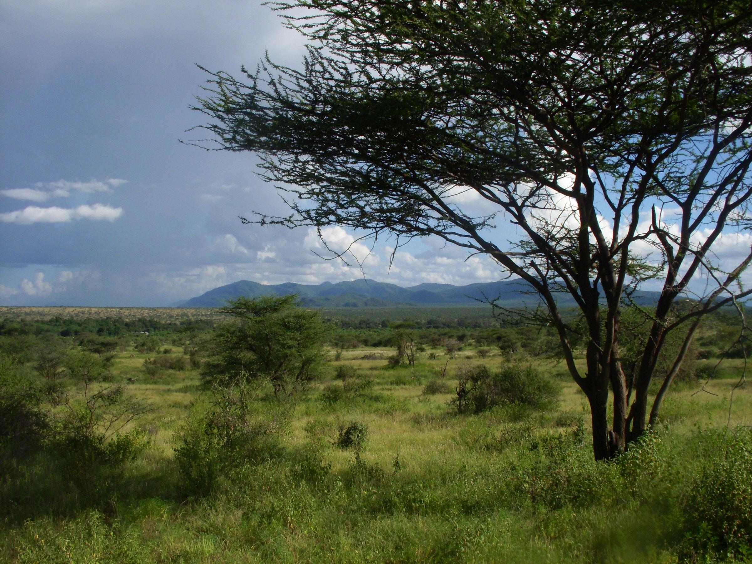 las sabanas los paisajes habituales de la evolución humana