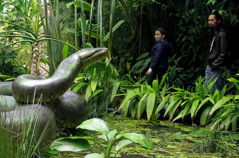 Una boa prehistórica revela los efectos del cambio climático en el ...