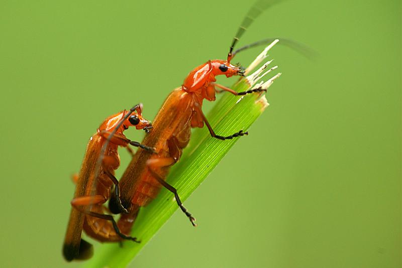 Unas 5.000 especies de insectos serán secuenciadas en los próximos ...