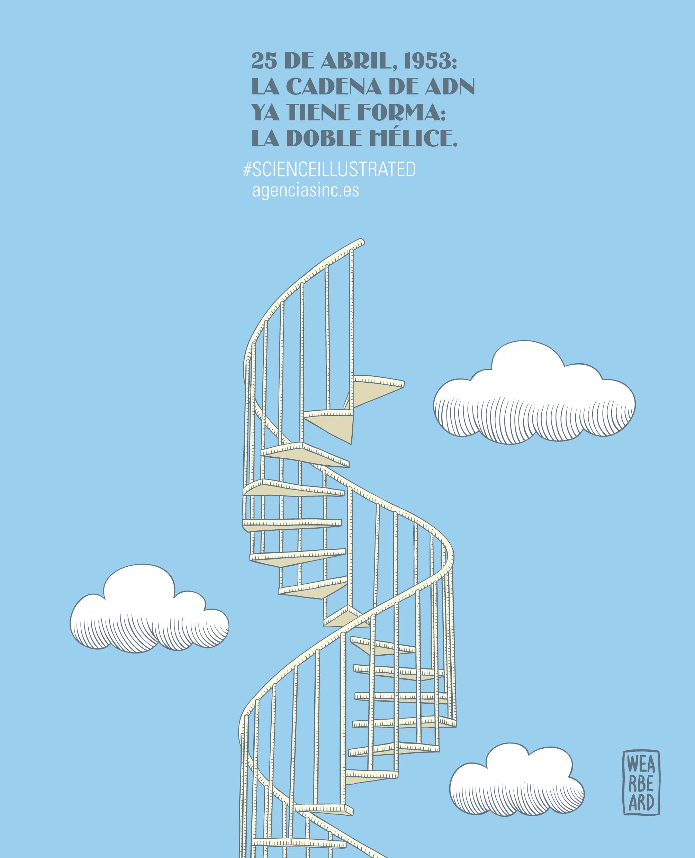 El Adn Ya Tiene Forma Ilustraciones Multimedia Sinc