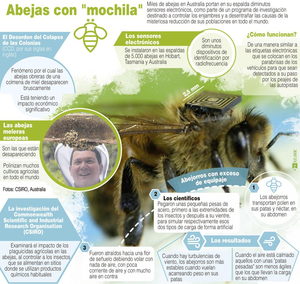 Infografía explicativa de la investigación llevada a cabo en Australia con abejas. / Efe