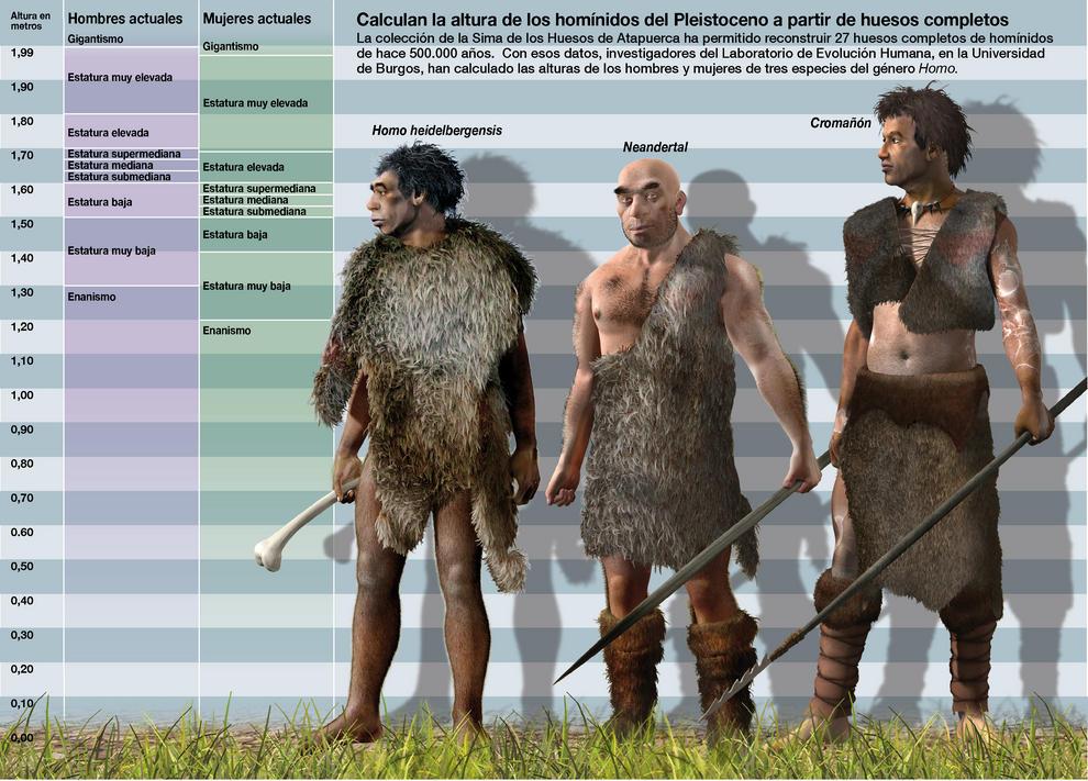 Los investigadores han calculado la altura de los homínidos del Pleistoceno a partir de huesos completos. Imagen: SINC/José Antonio Peñas.