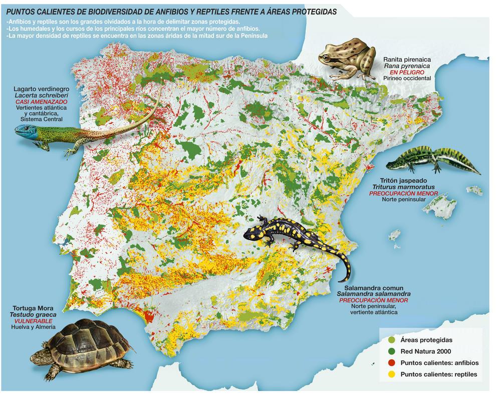 Los 'puntos calientes' (o hotspots) de biodiversidad de vertebrados dentro de la Península Ibérica, que suponen el 3,7% del territorio, están desprotegidos en su gran mayoría.