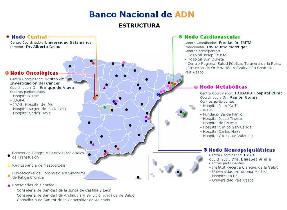 Mapa elaborado por la Fundación Genoma España que muestra los distintos nodos del Banco Nacional de ADN.