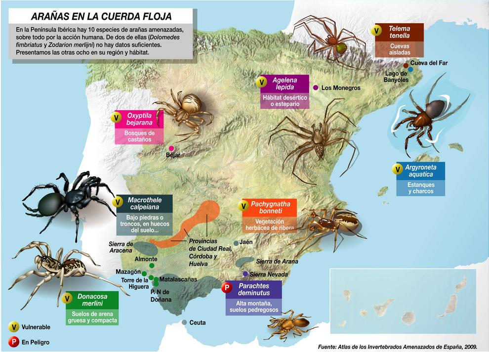 Distribución de las arañas en peligro según el Atlas Amenazados de Invertebrados de España.