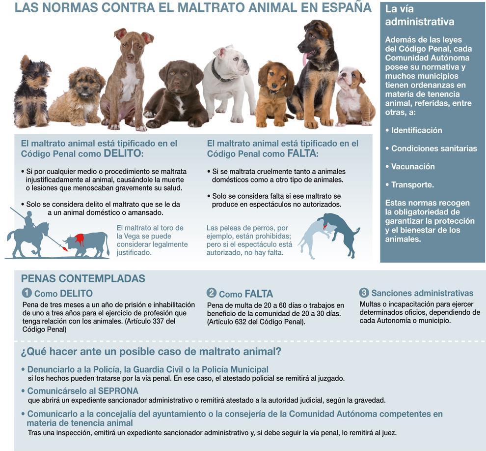 En esta infografía presentamos cada una de las vías que protegen a losanimales de los malos tratos en España, las penas que se contemplan y los pasos que el ciudadano debe seguir si se encuentra un animal maltratado. José Antonio Peñas / Sinc