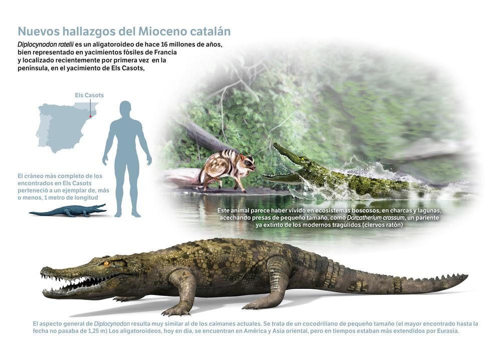 Diplocynodon ratelii, de aspecto muy similar a los caimanes actuales, acechaba presas de pequeño tamaño como roedores.