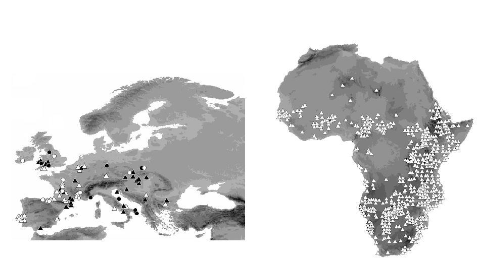En el mapa de la izquierda aparece la situación de los yacimientos con restos fósiles que indican la presencia de la especie en Europa durante el Pleistoceno Tardío, hace 126.000 años (círculo negro), 42.000 años (triángulo negro), 30.000 años (círculo blanco) y 21.000 años (triángulo blanco) y en el la derecha las localidades africanas con presencia actual o histórica de Crocuta crocuta.