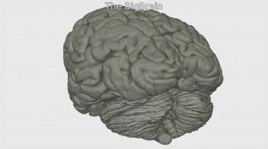 BigBrain recrea el cerebro humano en 3D con una precisión sin ...