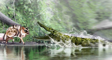 "<p><em>Diplocynodon ratelii</em>, which is very similar in appearance to today's caimans, stalked small prey, such as rodents and other extinct fish.&nbsp;/ <a href=""http://www.agenciasinc.es/En-exclusiva/PROGRAMADOS/Los-ultimos-caimanes-que-vivieron-en-Espana2"" target=""_blank"">José Antonio Peñas (SINC)</a></p>"