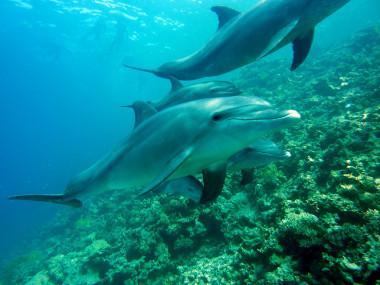 <p>Los delfines que bucean en profundidad necesitan unritmo cardíaco más elevado. / Pixabay</p>