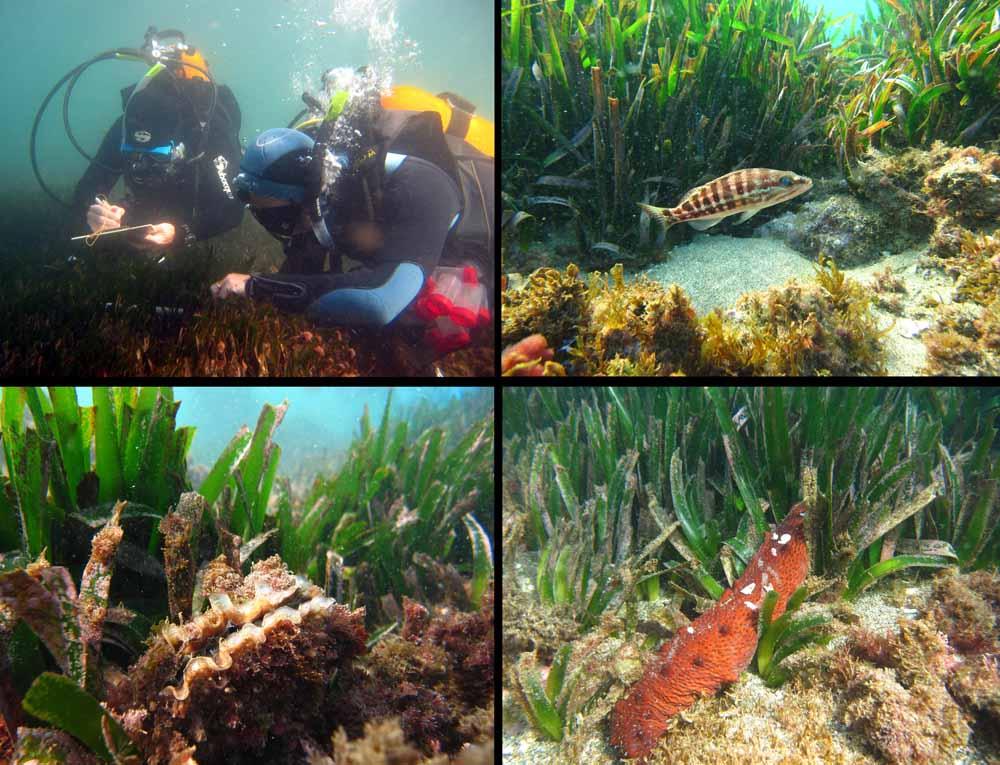 Científicos detectan una extraordinaria diversidad de moluscos en el litoral de Mijas
