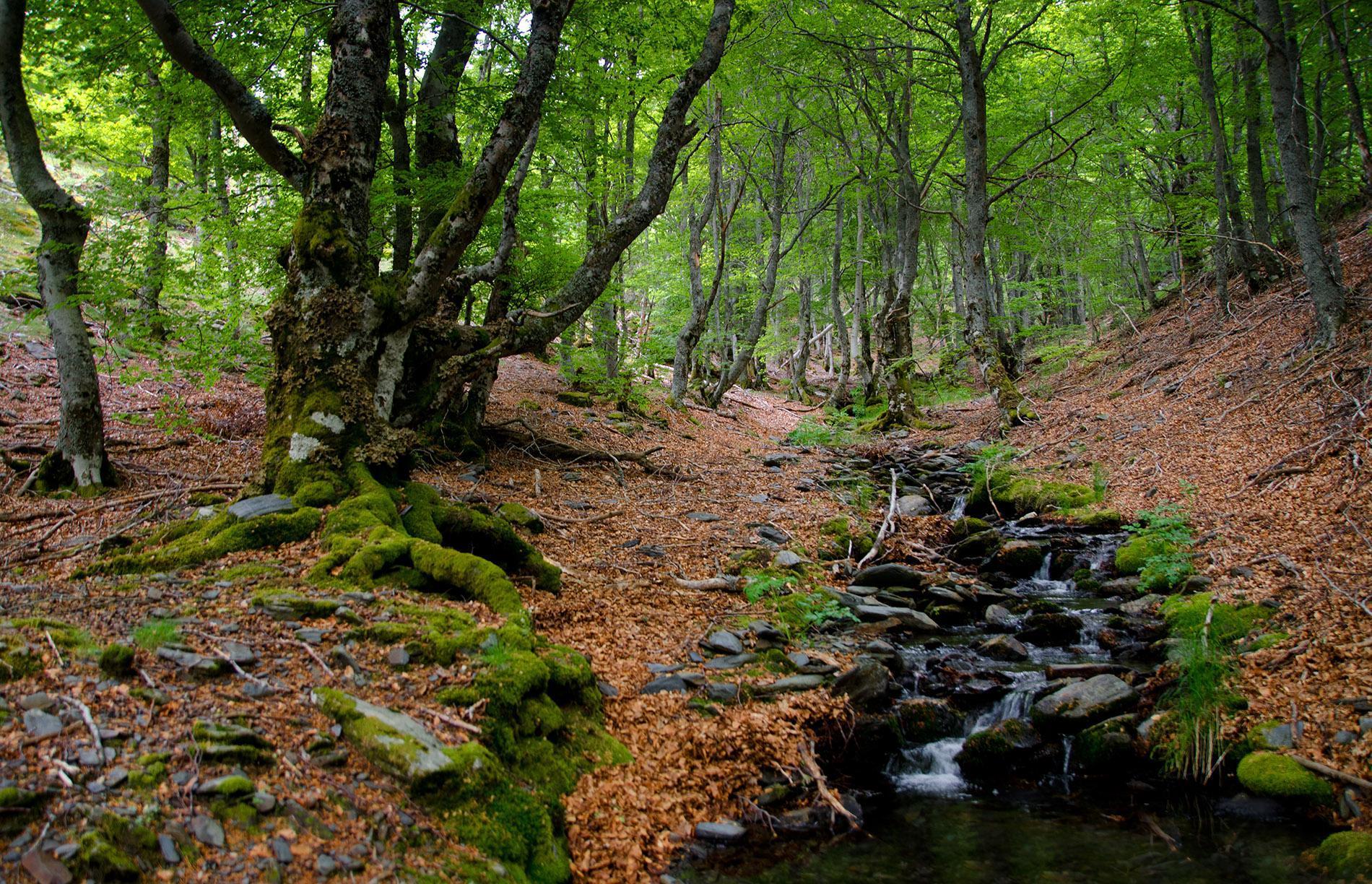 ¿Cómo Compiten Los árboles En El Bosque Para Sobrevivir