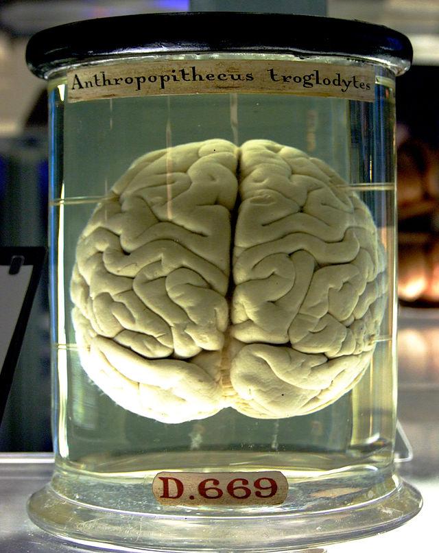 ¿Cómo se comunican las neuronas para resolver una tarea cognitiva?