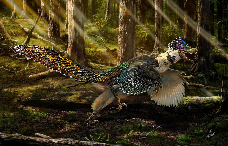 Descubierto en China un pariente con plumas del 'Velociraptor'